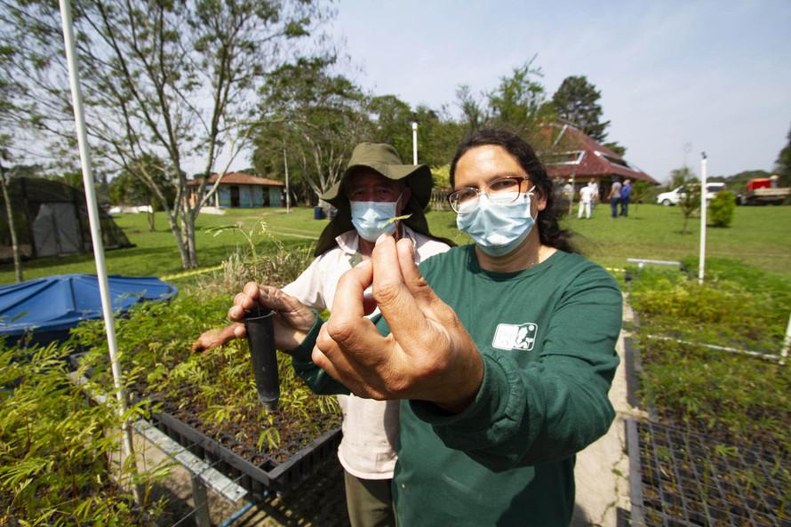 No Dia da Árvore, Sanepar destaca plantio de 138 mil mudas em áreas de mananciais