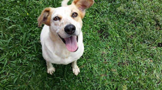 Hoje acontece a próxima edição do Amigo Bicho, evento de adoção de pets em Curitiba