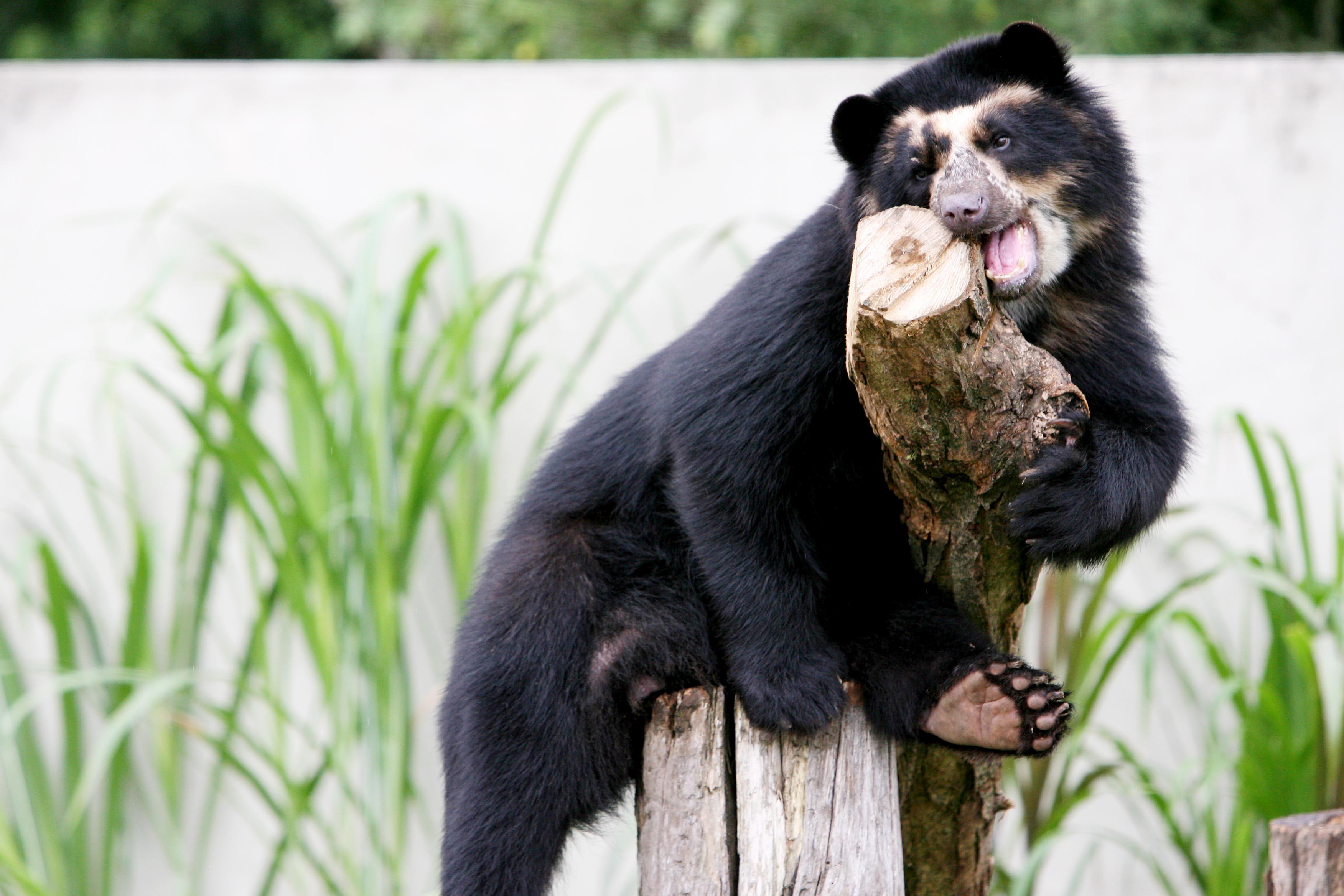 Zoológico de Curitiba volta a receber visitantes para o percurso a pé